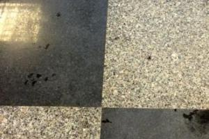 Ponçage des pierre granit AV