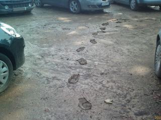 Nettoyage après dégâts des eaux évacuation de boue - C. Darmanin